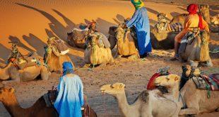 سوسيولوجيا القبيلة الصحراوية