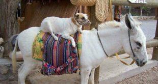متلازمة حمار جان بوريدان وكلب بافلوف